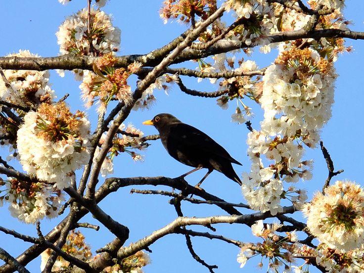https://flic.kr/p/SeGakj | Proljeće