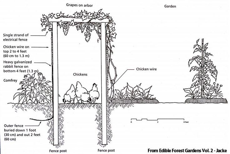 Interesteding in learning more about permaculture?  Here's some great info about it and how to incorporate it in your homestead~The Homesteading Hippy