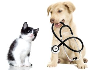6 Common Misconceptions About Veterinary Care in Tulsa - http://www.allcreaturesvettulsa.com/misconceptions-veterinary-care-tulsa/