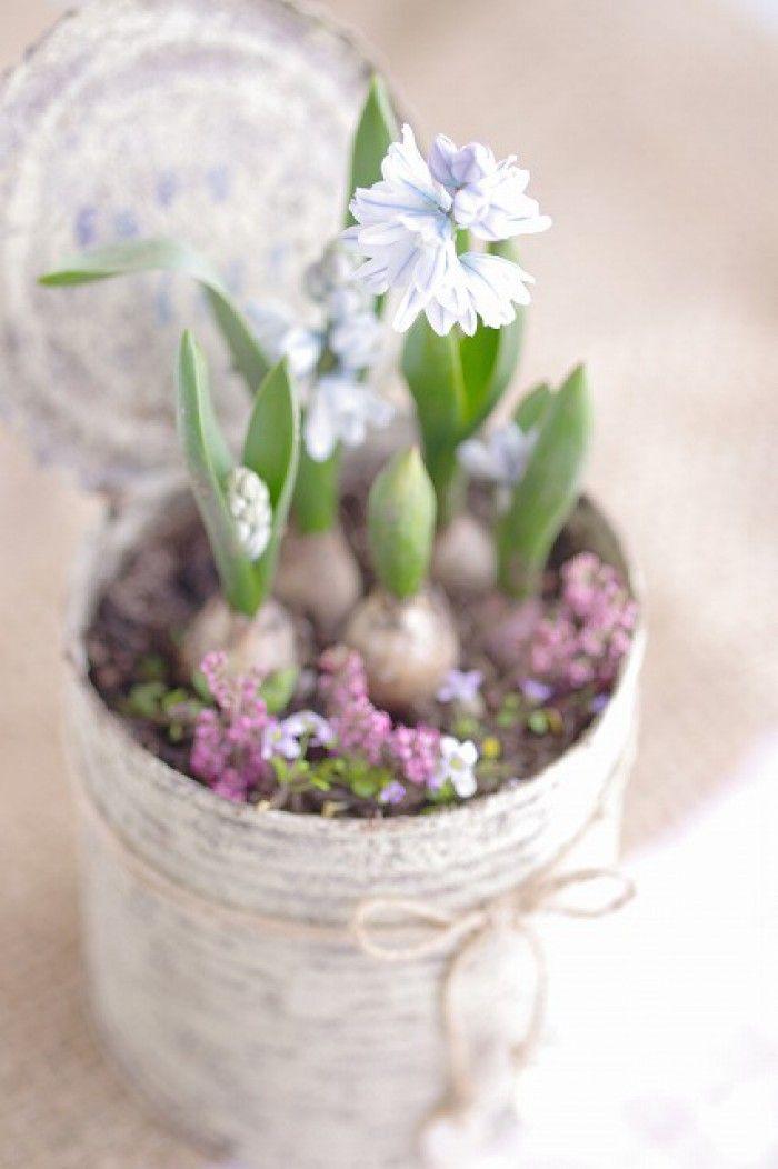 hyacinten en blik
