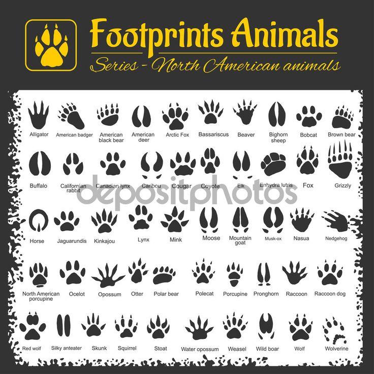"""Képtalálat a következőre: """"erdei állatok lábnyomai"""""""