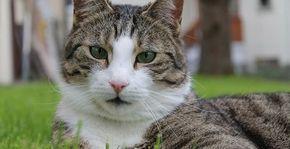Was tun gegen Katzenkot im Garten?