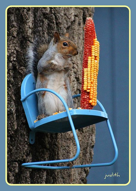 Small metal chair attached to tree for squirrel feeder... too cute.