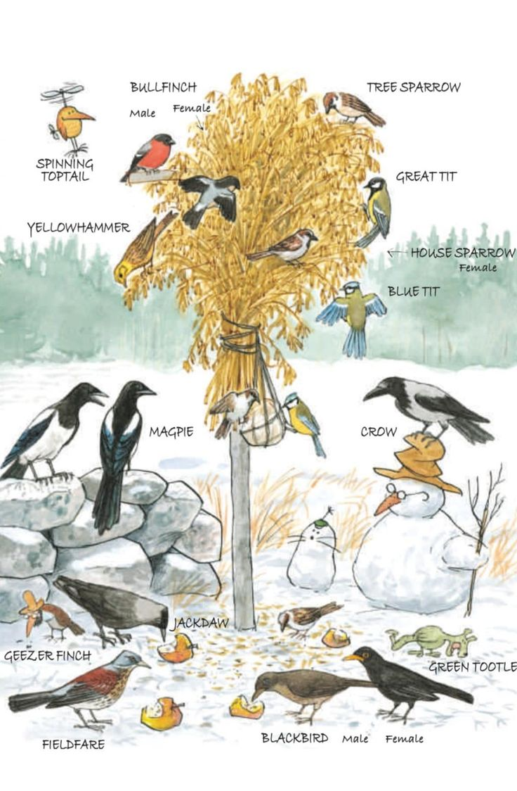 A page from Findus, Food and Fun showing Winter birds.