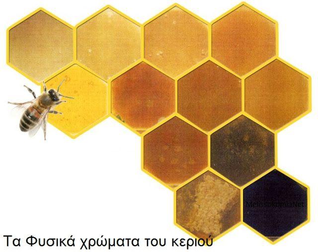 Μελισσοκομία Net