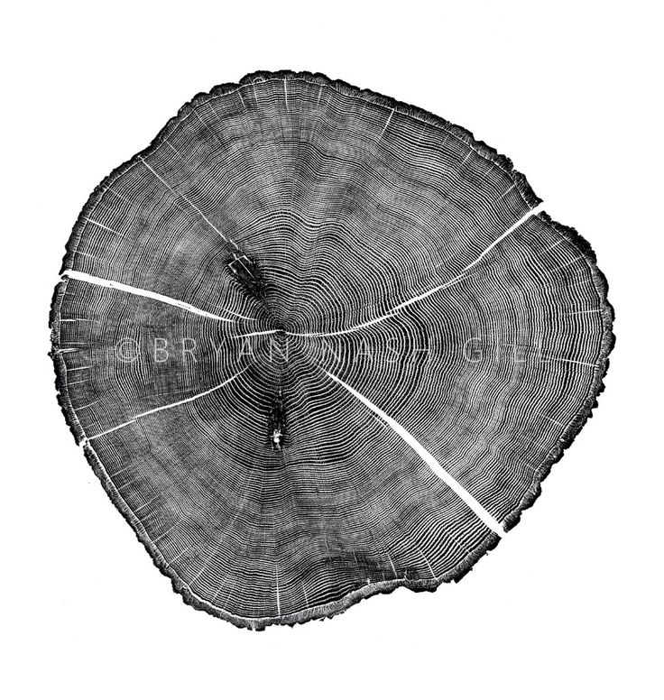 best method for dating tree rings These rings result from the change in growth speed through the seasons of the year, with each ring usually marking the passage of one year in the life of the tree this technique works best in temperate climates where the seasons differ more markedly, and, obviously, one can only date back a few hundred years as very old.