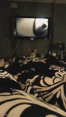 Bedtime attack!