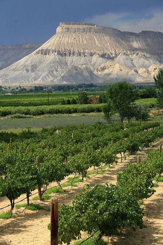 Colorado Wine Country, Mt Garfield