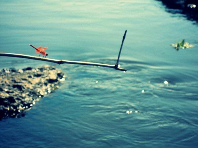 sungai terusan bengawan solo desa bandarejo | via @hennni