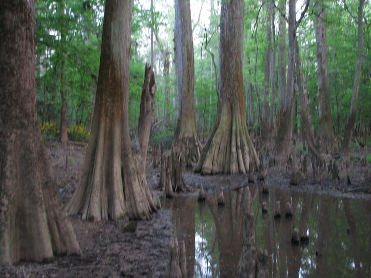 Congaree National Park - It's practically in my backyard ...