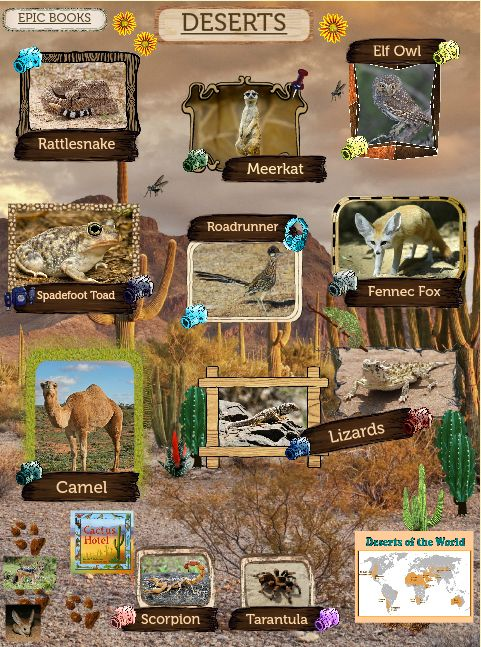 A desert is a barren area of land where little precipitation occurs and consequently living conditions are hostile for plant and animal life. The lack of vegetation exposes the unprotected surface of the ground to the processes of denudation. #glogster #glog #desert #fauna&flora