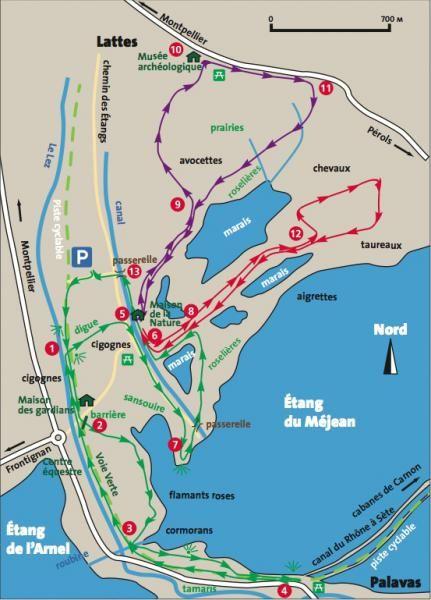 Cigognes, hérons, ibis : 3 balades autour de l'étang du Méjean | La Gazette de Montpellier.fr