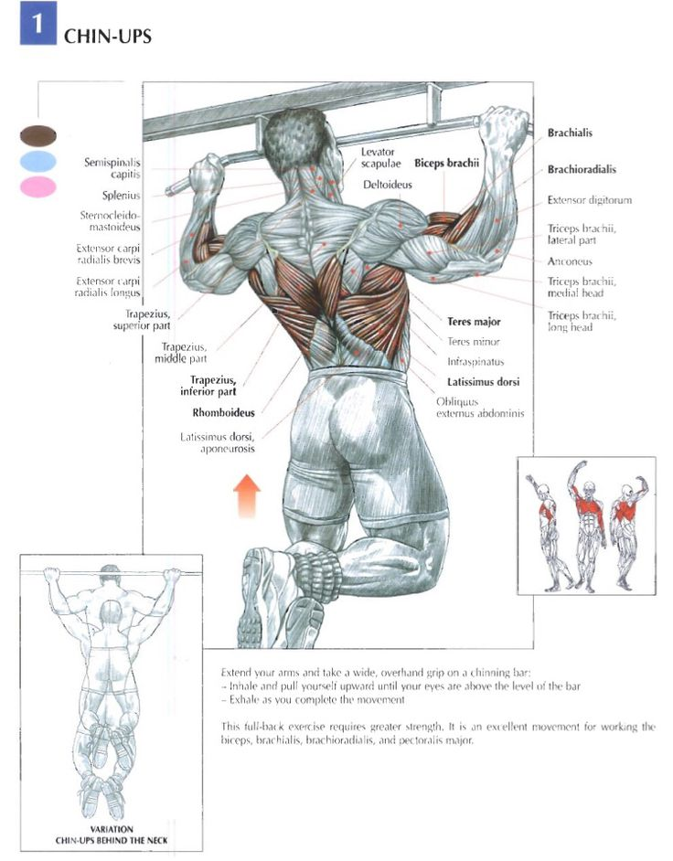 19 besten Trainin Anatomy (Back) Bilder auf Pinterest | Bodybuilding ...