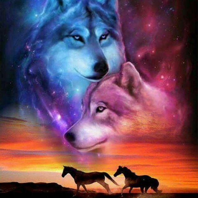 40 best Wolf images on Pinterest | Wölfe, Wölfe kunst und Anime wolf