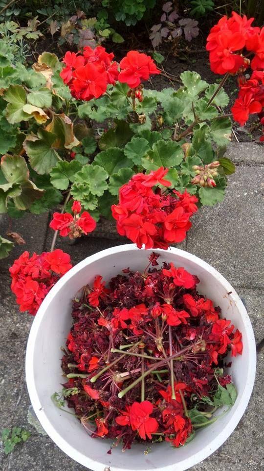 Wol verven met geraniums. www.wolspinsels.nl