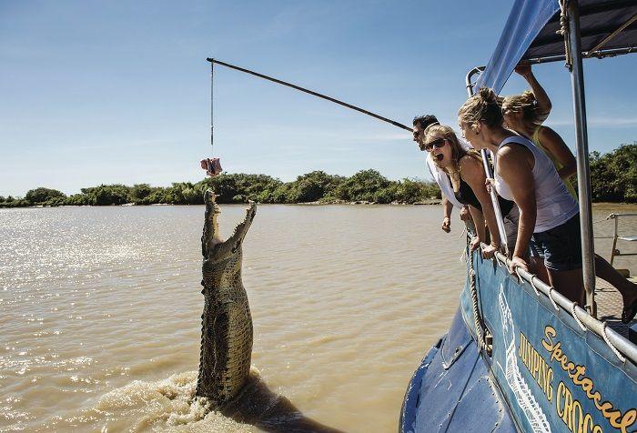 Jumping Crocs in Darwin!