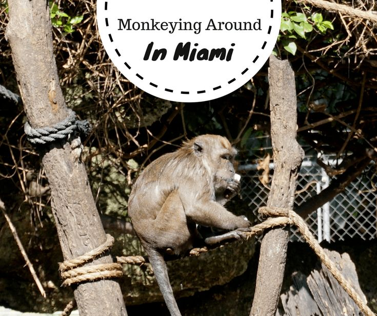 When most people think of Miami, I'm sure a rainforest doesn't usually come to mind. But a rainforest (and plenty of monkeys!) is exactly what you will fin