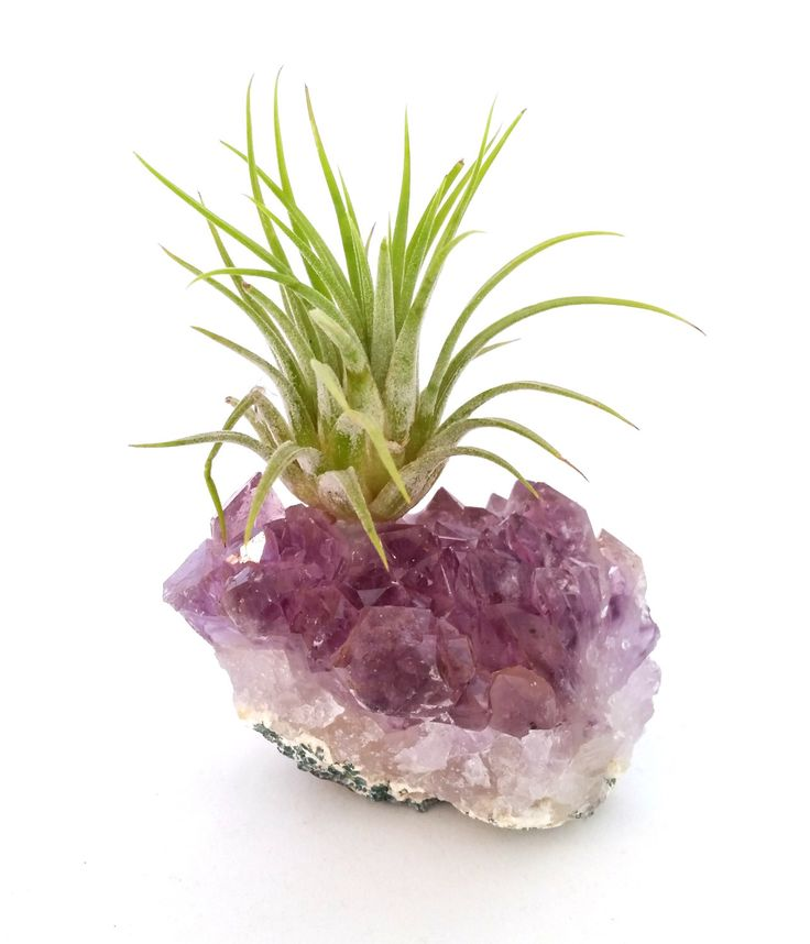 Amethyst Cluster with Air Plant , Boho  Mother's Day Gift ,  Ionantha  Gemstone , Desk Accessory , Air Plant Garden  , Crystal Decor by ParadiseAirPlants on Etsy https://www.etsy.com/au/listing/502375754/amethyst-cluster-with-air-plant-boho