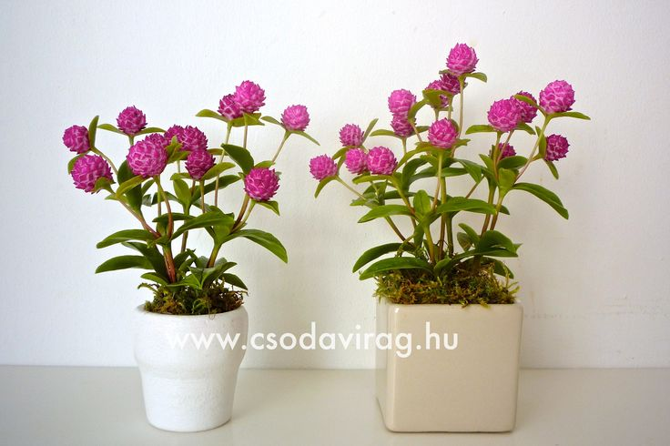 Gomphrena globosa (Bíborka) - My clay flower https://www.facebook.com/Csodavirag