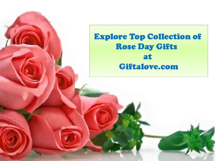 Explore Romantic Rose Day Gifts for Someone Special!!  Are you looking for Romantic Rose day gifts for your sweetheart? Giftalove is showcasing vast collection of Romantic Rose day gifts. Buy best selling valentine gits hampers at attractive price. Explore Rose day gifts, valentine serenades, valentine week gifts and hampers for her/him. Check it out at http://www.giftalove.com/valentine/rose-day-485.html