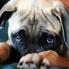 When Your Dog's Eye Boogers Are More Than Just Gross