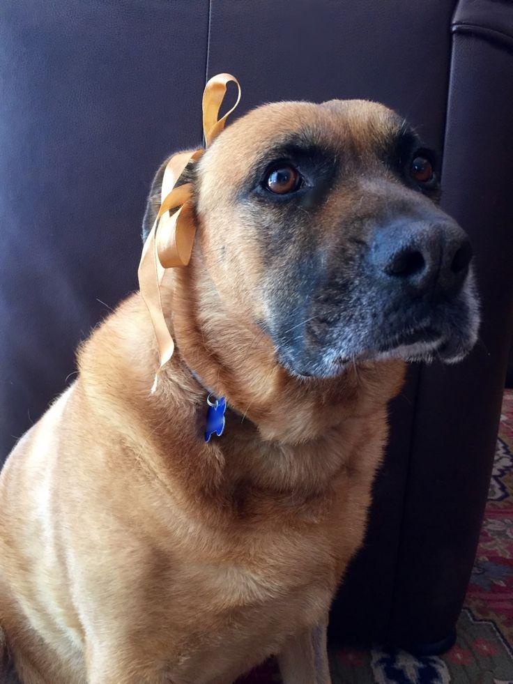 Sara dog animal sweet