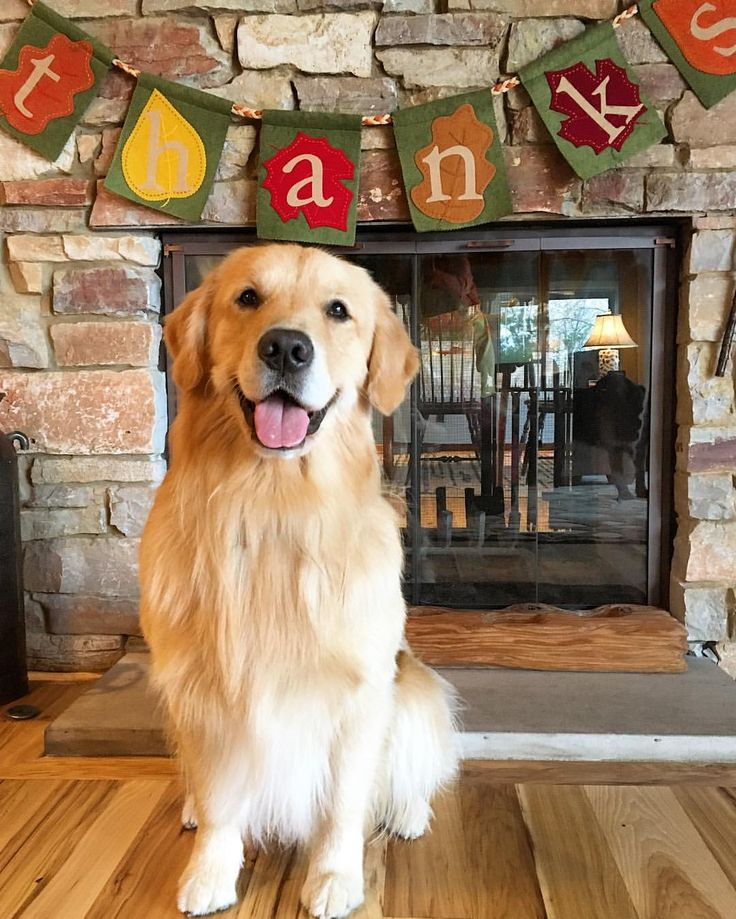 See this Instagram photo by @porter_the_golden • 3,094 likes