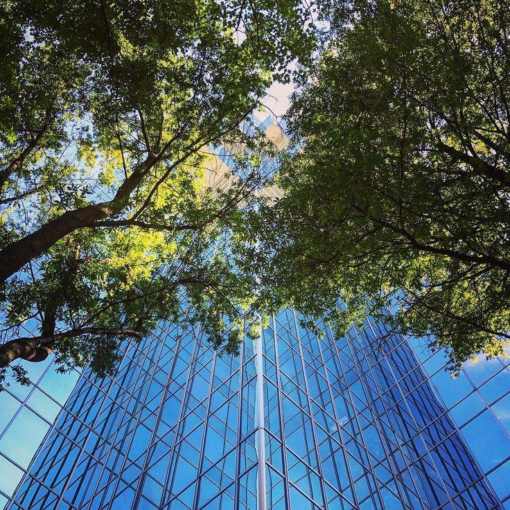 #skyscraper #skyscrapers #architecture #lookingup #tree #trees #nature #reflection #grid #travel #travelgram #traveling #travelphotography #atlanta #atl #georgia #buckhead