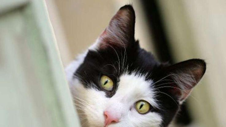 Katze aus dem Ausland mitbringen