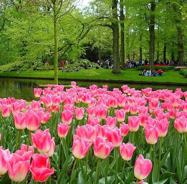 32 Gambar Pemandangan Bunga Bunga Tx Travel Pusat Manjakan Mata Anda Dengan Pemandangan Download 6 Pemandangan Yang Mengag Bunga Gambar Bunga Bunga Cantik