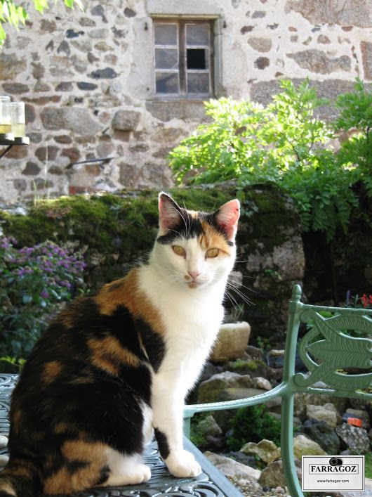 Sweet memories of lazy Sundays in the French countryside.  FARRAGOZ - Online Courses in the Art of Patina.   #frenchcountry #france #patina #farragoz #rustic #frenchgarden #auvergne #cat #lazydays