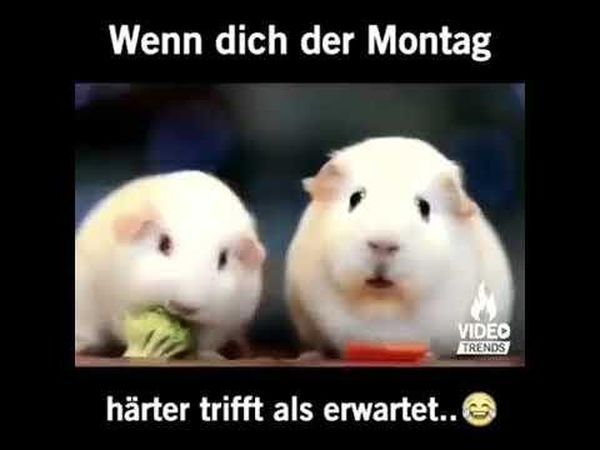 Kostenlose Deutsche Videos