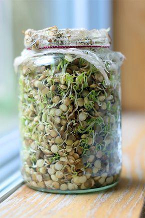 Os brotos e sementes germinados são extremamente nutritivos e benéficos à saúde, com alta concentração de vitaminas essenciais ao nos...