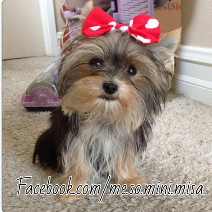 Misa Minnie - so cute!  Like my three little ones - love my little girls!