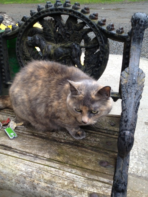 Abbie is a Muted Tortoise Shell Cat.  In charge of 4 deer and 45 ducks and geese.
