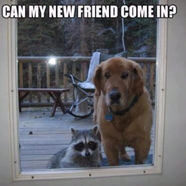 YES: Cute Animal, Animal Pictures, Best Friends, Pet, Odd Couple, My Friends, Knock Knock, House, New Friends