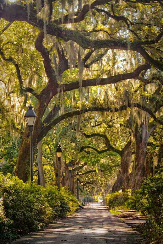 Savannah - Georgia : Forsythe Park. Beautiful. So happy to have stopped here on our honeymoon.