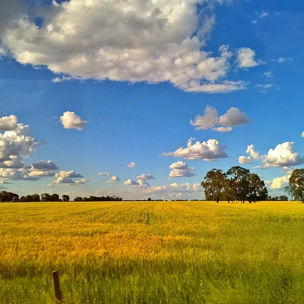 The wide open plains of Chinchilla are waiting to be explored #thisisqueensland by @kyheale