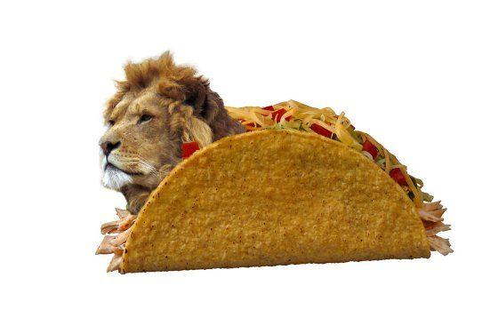 Lion-Meat-Tacos.jpg (560×375)