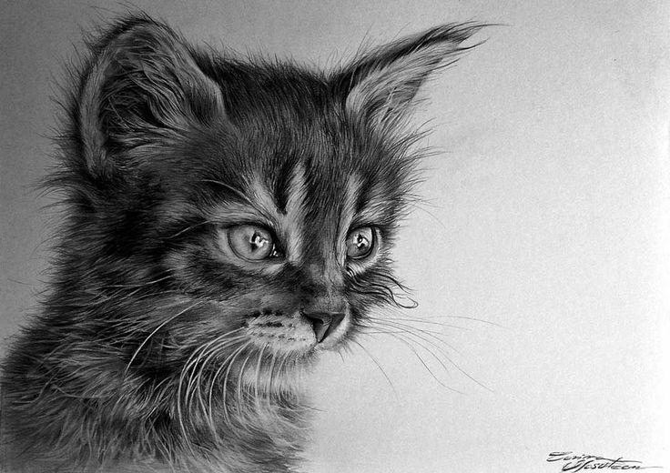 Kitty - Desen în Creion de Corina Olosutean // Kitty - Pencil Drawing by Corina Olosutean