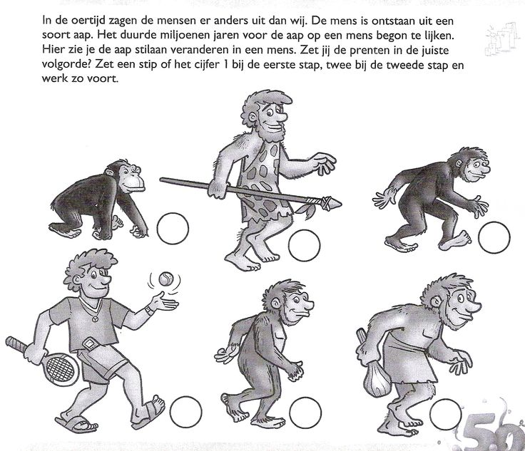 Van aap tot mens