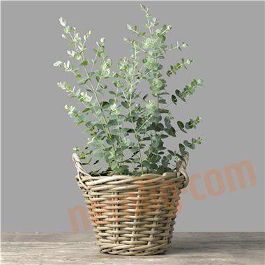 eucalyptus gr nne planter plants pinterest planters plants og my dream home. Black Bedroom Furniture Sets. Home Design Ideas
