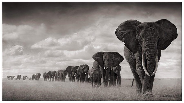 Elephant society. Don't know the source of this photo. Srsly beautiful image.