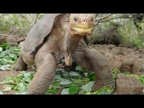 Last Pinta Giant Tortoise Lonesome George Dies