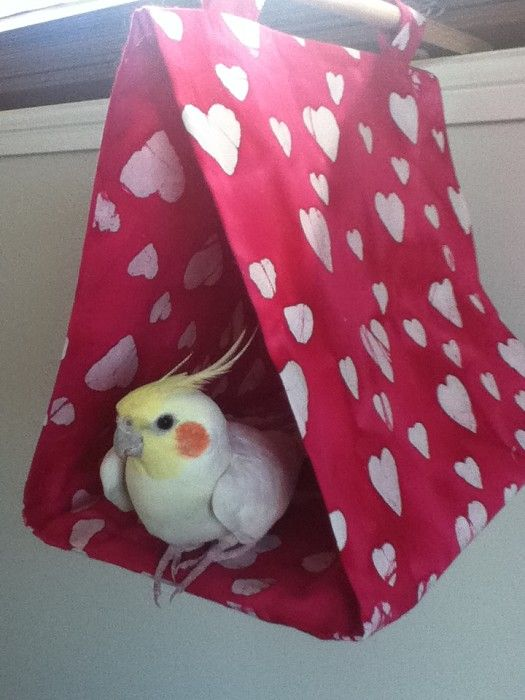 Hanging Bird Tent. I thought this could be useful if your birds get cold, or need a cozy place to sleep.
