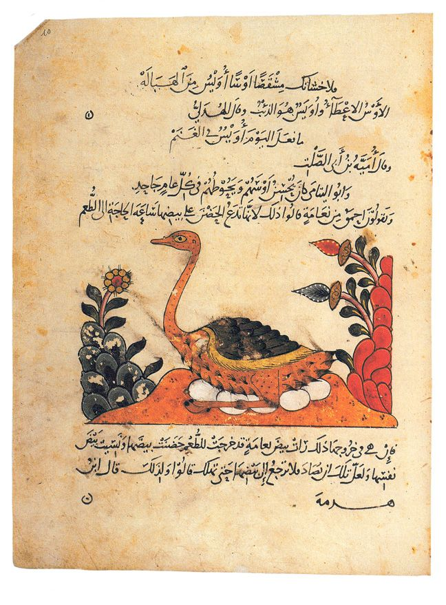 """Chapter 5. The Islamic Era plate 187. Page from the manuscript of the Kitab al-Hayawan (Book of Animals) by al-Jahiz in the Biblioteca Ambrosiana, Milan: it depicts a brooding ostrich."""