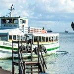 Fotografia Web | WildWeb@creative #PhotoArt #Web #MorroDeSaoPaulo #Bahia #Brazil