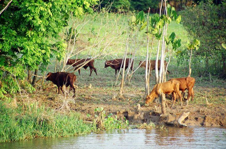 http://tonkosti.ru/Фото_Река_Амазонка