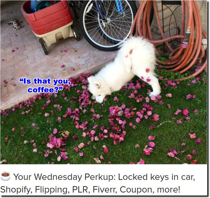 ☕ Your Wednesday Perkup: Locked keys in car, Shopify, Flipping, PLR, Fiverr, Coupon, more!