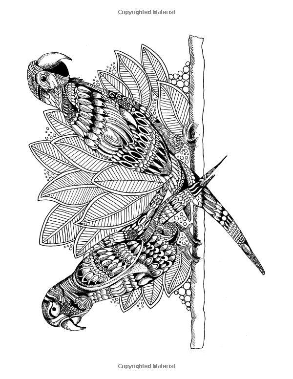 46 best coloriage perroquet images on pinterest - Perroquet dessin ...
